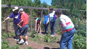 Participants helped weed and also harvested some vegetables