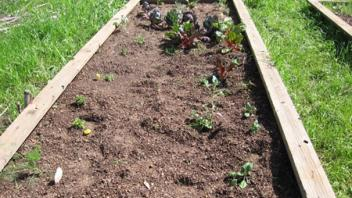 This garden featured a variety of different vegetables which were started from seeds and seedlings