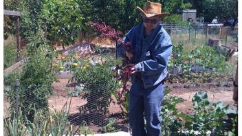 A participant helped weed the garden and get rid of unwanted plants so the vegetables can grow