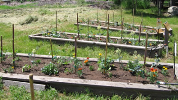 After a few weeks the garden beds filled up with growing flowers and vegetables