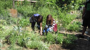 High school students planted and harvested vegetables