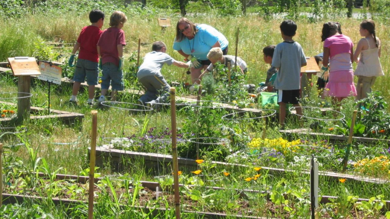 students in the school garden