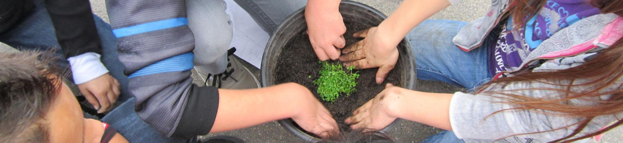 Kids growing a plant.
